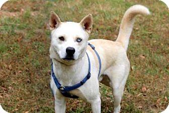 Husky Mix Dog for adoption in Spring Valley, New York - ZANE