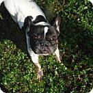 Adopt A Pet :: Shena PENDING