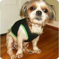 Adopt A Pet :: Penny - Mooy, AL