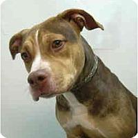 Adopt A Pet :: Daffy - Port Washington, NY