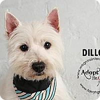 Adopt A Pet :: Dillon - Omaha, NE