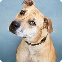 Adopt A Pet :: HANNAH - Phoenix, AZ