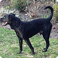 Adopt A Pet :: Brando - Hamilton, ON