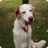 Adopt A Pet :: Horton-ILLINOIS - Wood Dale, IL