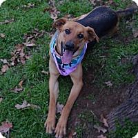 Adopt A Pet :: Liz - Burleson, TX