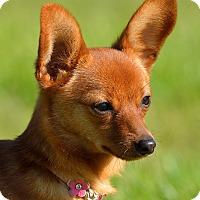 Adopt A Pet :: Sophia - Dacula, GA