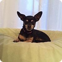 Adopt A Pet :: Bella - Edmonton, AB