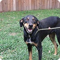 Adopt A Pet :: Lewis - West Bend, WI
