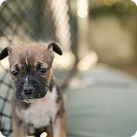 Adopt A Pet :: Pueblo - San Antonio, TX