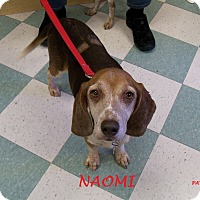 Adopt A Pet :: NAOMI - Ventnor City, NJ