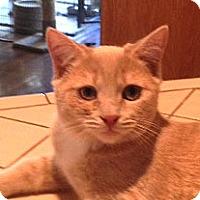 Adopt A Pet :: Loki - Woodland Hills, CA
