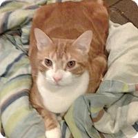 Adopt A Pet :: Tang (foster care) - Philadelphia, PA