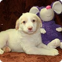 Adopt A Pet :: Dyson - Salem, NH