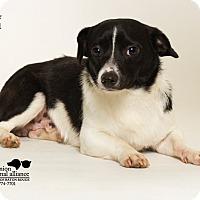 Adopt A Pet :: Spencer - Baton Rouge, LA