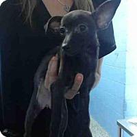 Adopt A Pet :: A496126 - San Bernardino, CA