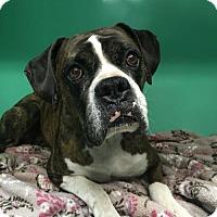 Adopt A Pet :: Greta 2 - Woodinville, WA