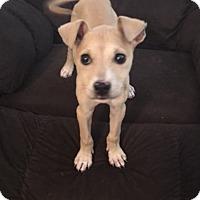 Adopt A Pet :: Izziebelle - Hohenwald, TN