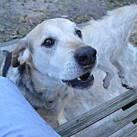 Adopt A Pet :: ~~BINGO~~ - wilson, NC