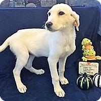 Adopt A Pet :: Ghost - BIRMINGHAM, AL