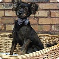 Adopt A Pet :: Buck - Benbrook, TX