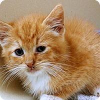 Adopt A Pet :: Huckleberry - Lincolnton, NC