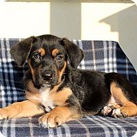Adopt A Pet :: Coolio - Los Angeles, CA