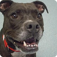 Adopt A Pet :: Meeka - Wichita, KS