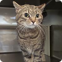 Adopt A Pet :: Tammy - Geneseo, IL