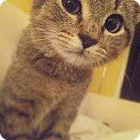 Adopt A Pet :: Lindsey *Pending Adoption* - Philadelphia, PA