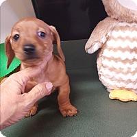 Adopt A Pet :: Rudy - Palm Bay, FL