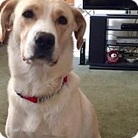 Adopt A Pet :: Kellie - Willingboro, NJ