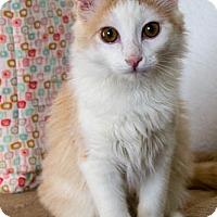Adopt A Pet :: Pixie - Prescott, AZ