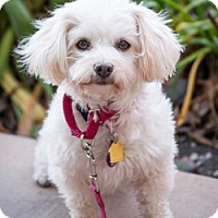 Adopt A Pet :: Karri D5681 - Fremont, CA