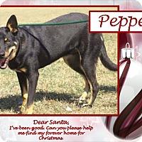 Adopt A Pet :: Pepper - Ringwood, NJ