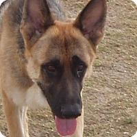 Adopt A Pet :: Herman - Dripping Springs, TX