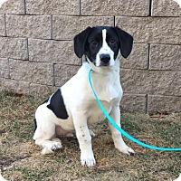 Adopt A Pet :: Al is in Rhode Island! - Plainfield, CT