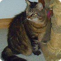 Adopt A Pet :: Zoydburg - Hamburg, NY