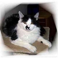 Adopt A Pet :: Ariel/Ellie - Montgomery, IL