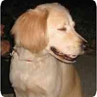 Adopt A Pet :: Barney - Miami, FL