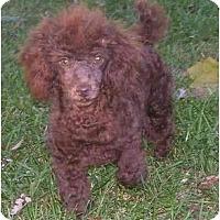 Adopt A Pet :: Twixer - Chandler, IN