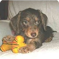 Adopt A Pet :: Dylan - Mooy, AL