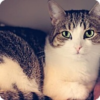 Adopt A Pet :: Libby - Markham, ON