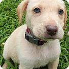 Adopt A Pet :: Babe Brûlée