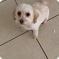 Adopt A Pet :: Princess - Pembroke pInes, FL