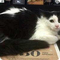Adopt A Pet :: Bogart - Hamilton, ON