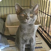 Adopt A Pet :: Jasmine - Island Park, NY
