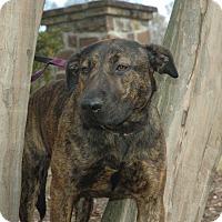 Adopt A Pet :: Khloe - Lawrenceville, GA