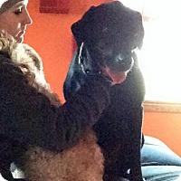 Adopt A Pet :: Barley - Elyria, OH