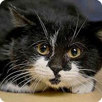 Adopt A Pet :: REUBEN - Pittsburgh, PA