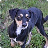 Adopt A Pet :: S/C Dina - Miami, FL
